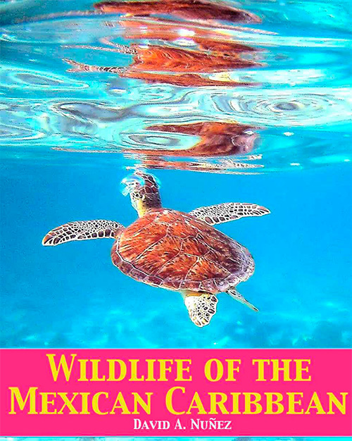 Wildlife of the Mexican Caribbean