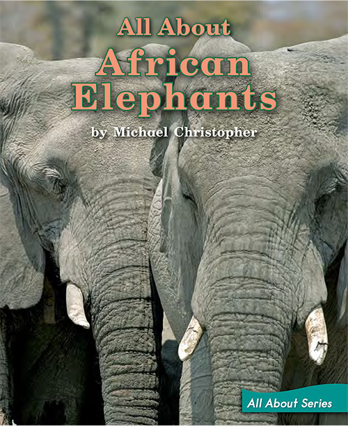 All about African Elephants