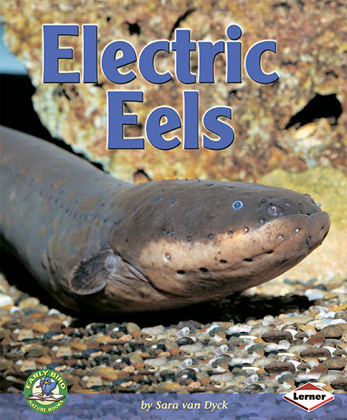 Electric Eels (Early Bird Nature)